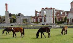 Cumberland Island National Seashore - ruins and wild horses and beaches
