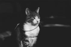 Lovely Pictures of Cats in Black and White-3