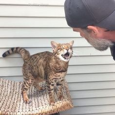 14 years ago, a man brought home an affectionate kitten and became his new dad. The two formed an incredible bond.Meet Mango Brown and his Cat Dad! Courtesy: @justmangobrown Mango Brown was six months old when his Cat Dad came into his life. The sweet Bengal kitty c...