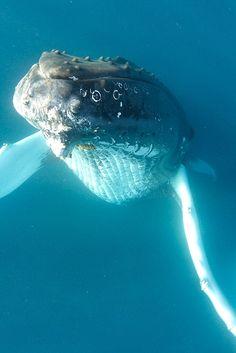 by MenloParkCA #whales #sealife #mammals