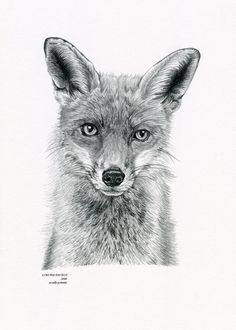 FOX 2 Limited Edition art drawing print signed by ArcadiaPortraits