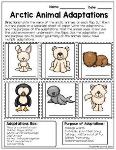 ARCTIC ANIMALS - Free Teacher Printables! Students cut and paste flaps where they match Arctic animals with their cold weather adaptations. They also discover the purpose of these adaptations.