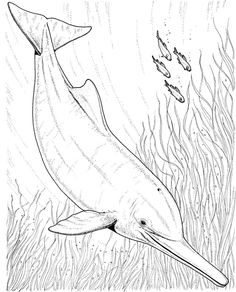 Two Dolphin Line Drawings Sea Pinterest Coloring books