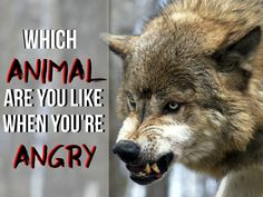When you're angry do you pounce like a tiger or attack like a shark?
