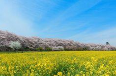 週末や日帰り旅行に!関東のおすすめ絶景スポット16選 | 楽天トラベル