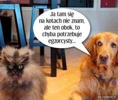 Ja tam się na kotach nie znam... Scary Funny, Very Funny Memes, Wtf Funny, Funny Cats, Funny Animals, Weekend Humor, Old Memes, Happy Photos, Man Humor