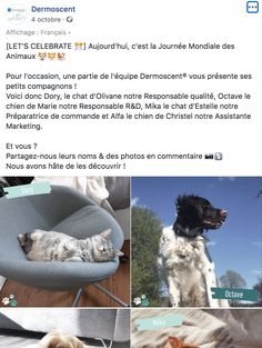 Journée mondiale des animaux Dermoscent Dog, Animaux