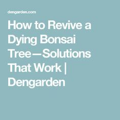 How to Revive a Dying Bonsai Tree—Solutions That Work Bonsai, Lawn And Garden, String Garden
