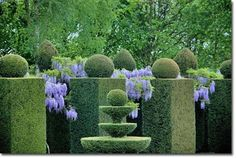 Giant topiaries & wisteria, Chateau De La Ballue in northern France / repinned on toby designs