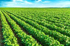 OGM: facciamo un po' di chiarezza