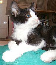 Gato Marco. El pequeño marco se perdió. Animals, Kittens For Adoption, Foot Prints, Gatos, Animales, Animaux, Animal, Animais