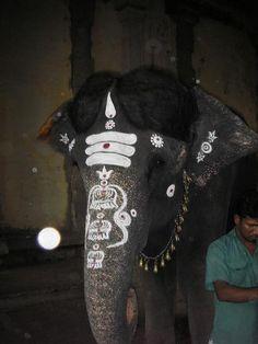 Elephant, Madurai,Tamil Nadu, India...