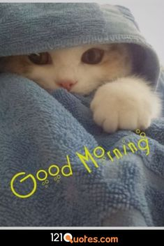 good morning quotes - good morning & good morning quotes & good morning quotes inspirational & good morning quotes for him & good morning wishes & good morning beautiful & good morning greetings & good morning images Good Morning Friends Images, Good Morning Cat, Morning Hugs, Cute Good Morning Quotes, Good Morning Beautiful Quotes, Good Morning Picture, Good Morning Messages, Good Morning Greetings, Morning Pictures