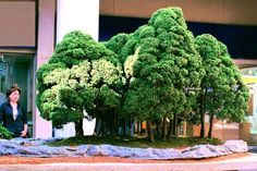 Bonsai - WOW! - a tiny forest
