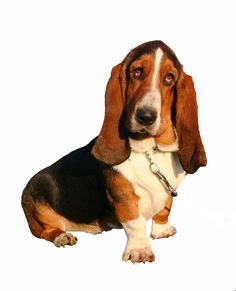 I love Basset & Blood hounds - they always make me happy.