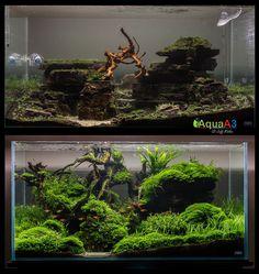 """Evolution"": tank by Jeffrey Miotke"