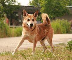 Ich bin ein aufgeweckter Husky-Mix und suche ein Zuhause! Kooperation von WG-Gesucht.de mit dem Tierheim Berlin.