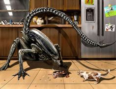 Xenomorph vs. House Cat <--- I think the house cat will definitely win. Aliens don't stand a chance against cats.