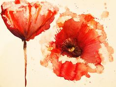 Floral painted poppy illustration on background. Ink and watercolor painting poppy seed heads l painted by the photographer Watercolor Poppies, Red Poppies, Watercolor Paintings, Watercolors, Poppies Art, Tattoo Watercolor, Orange Flowers, Painting Art, Poppies Tattoo