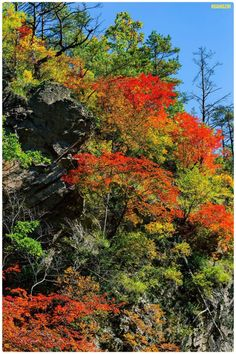 euph0r14:  nature | Autumn maple | by hz6229 |...