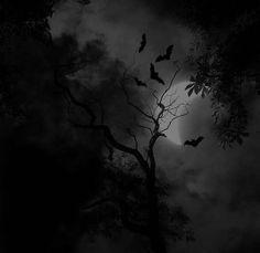Black and White horror trees Halloween night dark bats moonlight spooky
