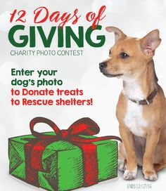 Enter your holiday dog photo and help us donate to rescues! Each entry equals $1 of dog treats Best Bully Sticks will donate.