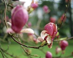 El magnolio en la terraza Deluz Fotografía Pablo Zamora
