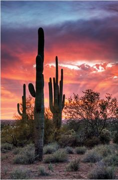 Arizona Been there Do you know how long it takes for one of these to grow? Beautiful Sky, Beautiful Landscapes, Beautiful World, Beautiful Places, Desert Pictures, Great Pictures, Art Et Nature, Desert Dream, Nature Photography