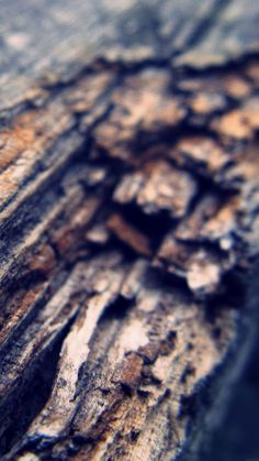 Wood / Find more Nature themed wallpapers for your #iPhone + #Android @prettywallpaper