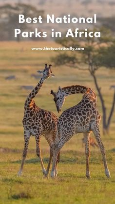 The best African national parks to view wildlife Top 10 National Parks, Most Visited National Parks, Travel Ideas, Travel Inspiration, Top Destinations, Africa Travel, Weekend Trips, Exploring, Cities