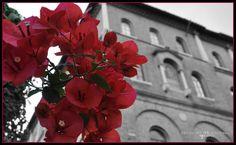 Rome, Italy, Facebook, Plants, Italia, Plant, Planets, Rome Italy