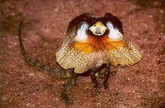 animales raros del desierto con sus nombres - Buscar con Google