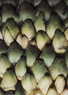 Artichoke scales Plakat