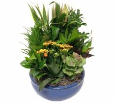 Rockcastle Florist offers the best selection of beautiful fresh flowers in Rochester NY. Easter Plants, Large Ceramic Planters, Dish Garden, Fresh Flowers, Flower Arrangements, Ceramics, Dishes, Beautiful, Ceramica