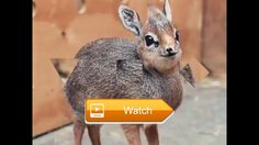 Compilation of cute animals  this is for all animal lovers  on Pet Lovers