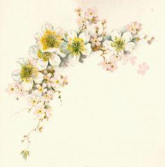 Antique Images: Free Flower Graphic: Vintage Dogwood Flower Clip Art from Vintage Wedding Book