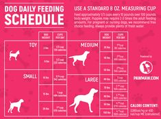 Puppy Day, New Puppy, Dog Feeding Schedule, Dog Whelping Box, Dog Chart, Hale And Hearty, Day Schedule, Pet Vet, Up Dog