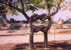 Chuk norris fact: come fare un nodo - Weird Trees, Dame Nature, Unique Trees, Trees Beautiful, Parcs, Weird And Wonderful, Tree Art, Amazing Nature, Oeuvre D'art