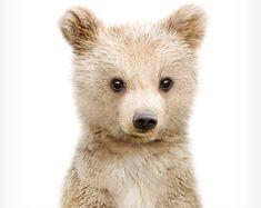 Bear cub print. The Crown Prints, Nursery animal prints, Woodland Nursery decor, Baby animals, Nursery wall art, Baby animal prints, Grizzly