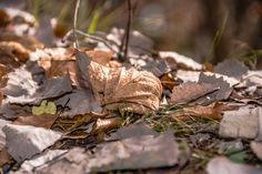 Colors Of The Wind  #austria #carinthia #fall #indiansummer #leaf #weissensee Carinthia, Indian Summer, Austria, Posts, Colors, Fall, Blog, Autumn, Messages