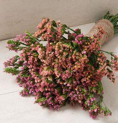 Flower Statice Sunset Mix D1572A (Multi Color) 100 Open Pollinated Seeds by David's Garden Seeds David's Garden Seeds http://www.amazon.com/dp/B00E7X95S4/ref=cm_sw_r_pi_dp_x2Rkvb04J2QW7