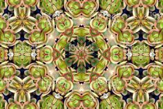 Search results for: 'lazingbee succulent' Bringing your home to life Canvas Art Prints, Canvas Wall Art, Royalty Free Images, Royalty Free Stock Photos, Abstract Photos, Canvas Frame, Boho Decor, Succulents, Creative