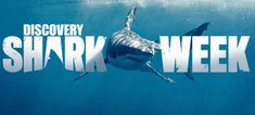 Shark Week-Shark's Teeth! Discovery Shark Week, Shark Art, Screen Shot, Public, Hero, Activities, Education, Movie Posters, Teeth