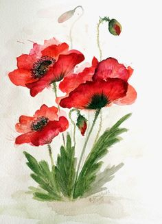 Ja i Moja Pasja: Akwarela / Auarelle / Akvarel - akwarelki Watercolor Poppies, Watercolor Cards, Red Poppies, Watercolor Paintings, Poppies Painting, Poppy Drawing, Botanical Art, Painting & Drawing, Flower Art