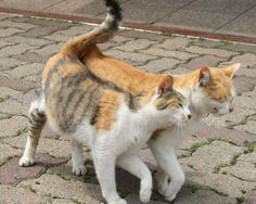 (lol)Cats in Love woow just look alike my two kittens Funny Cats, Funny Animals, Cute Animals, Animals Images, Animal Pictures, Pretty Cats, Beautiful Cats, Animals Beautiful, Little Kittens