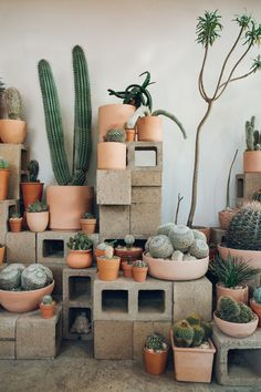 Cactus Store in Echo Park, LA - Haarkon in California.
