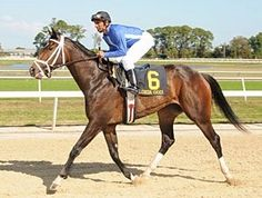 Don't Forget Gil(2006)(Filly) Kafwain- Livermore Leslie By Mt Livermore. 4x3 To Blushing Groom, 4(F)x4(F) To Crimson Satan. 19 Starts 4 Wins 3 Seconds 4 Thirds. $370,737. Won Florida Oaks(G3), Wayward Lass S, East View S, 2nd CCA Oaks (G1), Comely S(G2), 3rd Busanda S, Suncoast S, Saratoga Dew S, Real Prize S.
