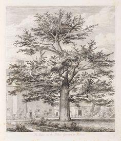 JACOB GEORGE Sylva Britannica; or Portraits of Forest Trees, Distinguished for their Antiquity, Magnitude, or Beauty   Сильва Британика или Портреты лесных деревьев, отличающиеся по своей древности, величию или красоте. первое издание 49 листов размером в фолио (536 x 365 мм) гравюра на меди продано  за £1,625 (RUB 121,432) #Bonhams #аукционы
