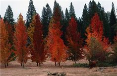 row of colorful trees