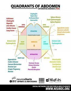 Quadrants of the abdomen anatomy physiology study notes pinterest abdominal quadrants ccuart Image collections